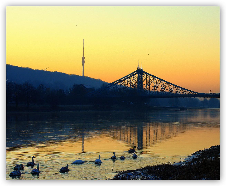 Loschwitzer Brücke II