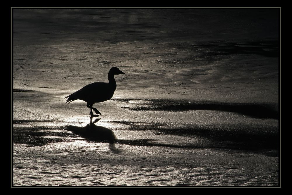 Lost on Ice by Uwe Schnittert