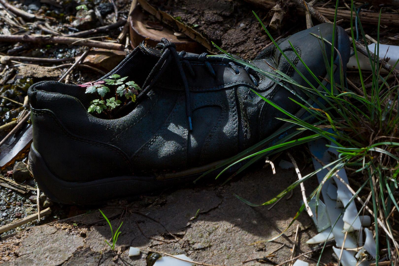 Lost Schuh