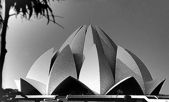 Lotosblume in New Delhi