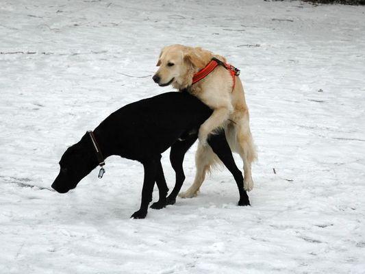 Lotte und Ben beim Spielen