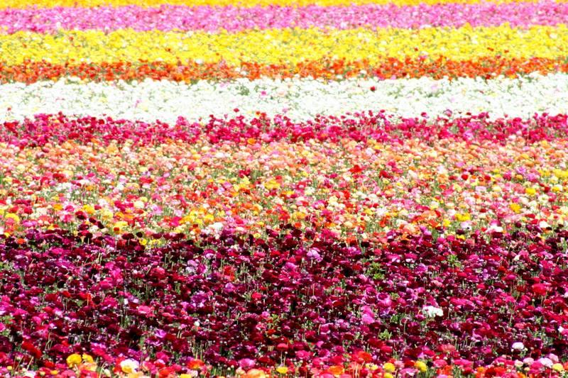 Lottsa Flowers
