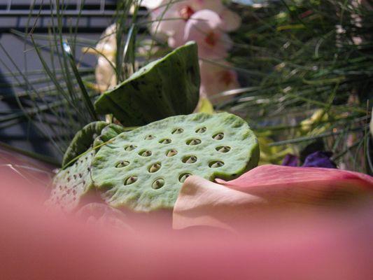 Lotus et orchidées
