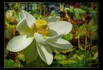Lotus sous le vent .