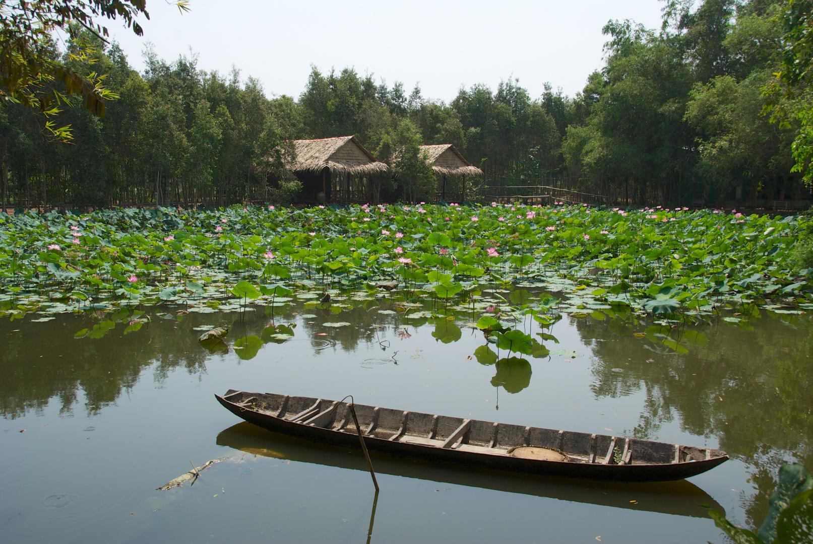 Lotusteich im Frieden - Vietnam