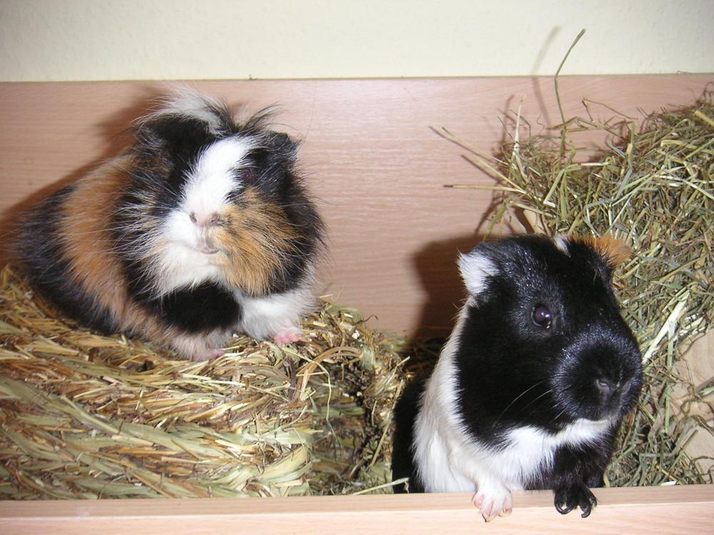 Louis und Theo