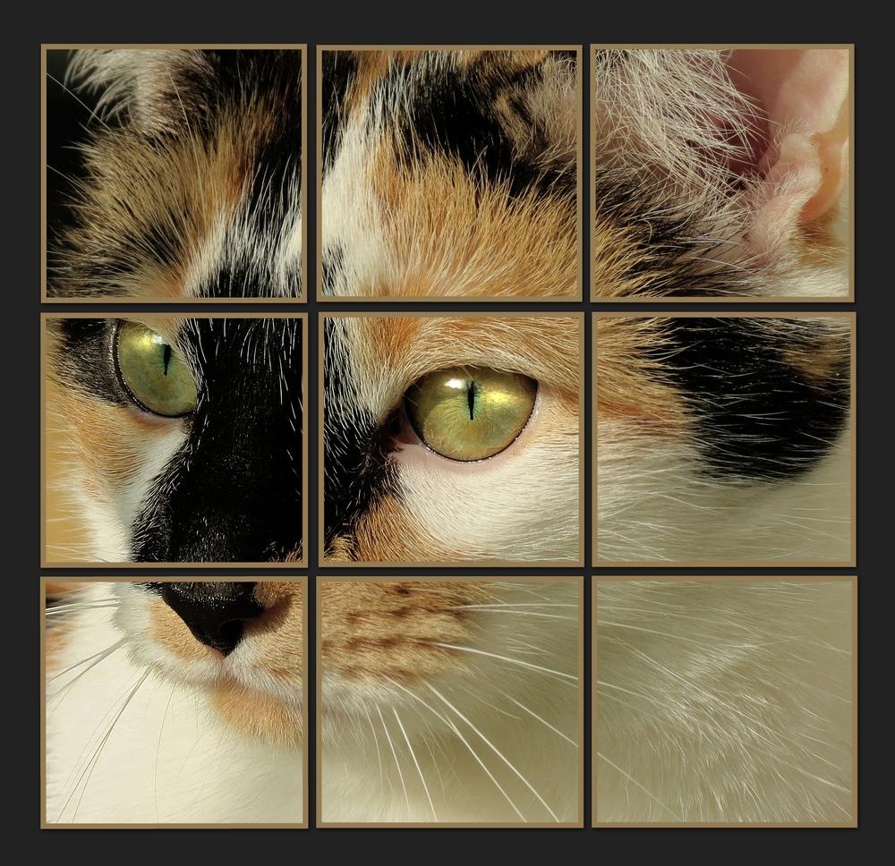 Louisa Quadrat im Quadrat