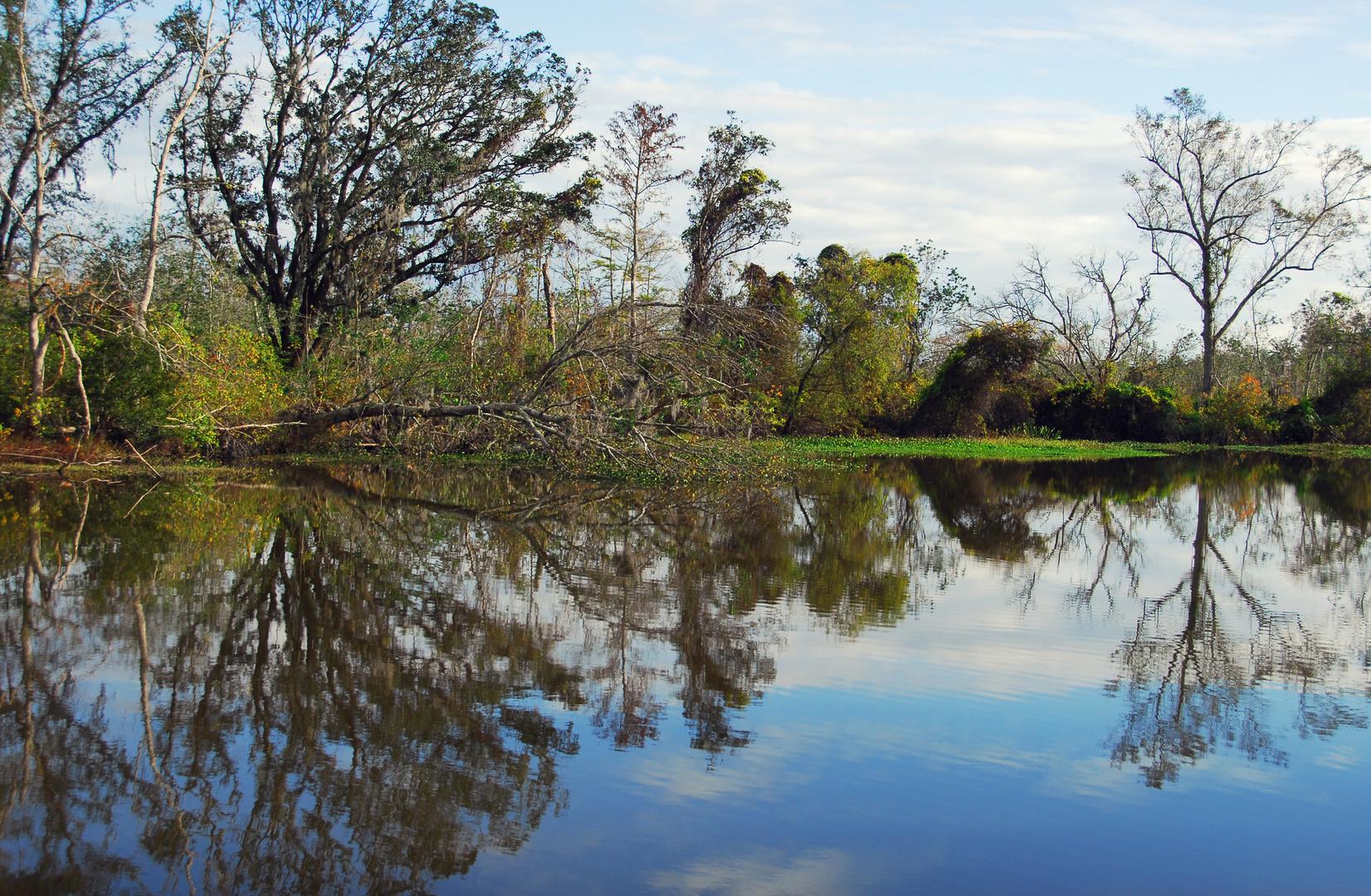 Louisiana-Sumpf
