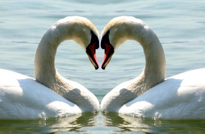 ?..Love..?