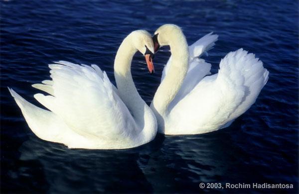 Love at Nymphenburg Park