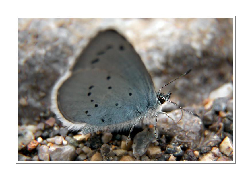 Love Bugs 09-05