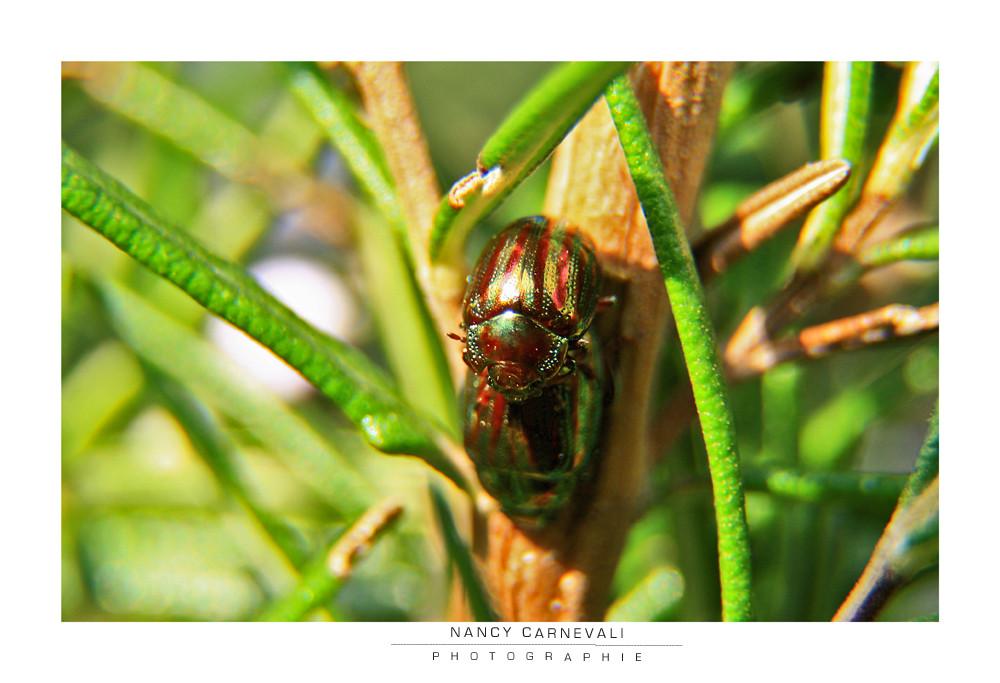 Love Bugs 09/01