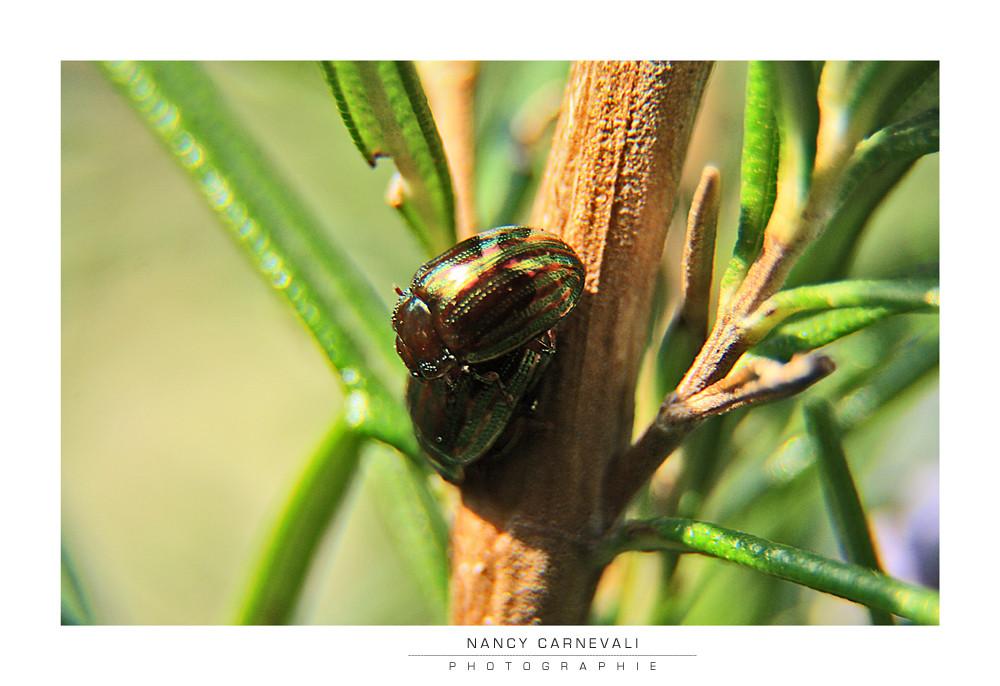 Love Bugs 09/02