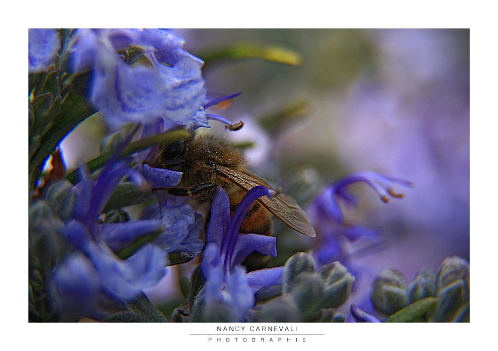 Love Bugs 09/03