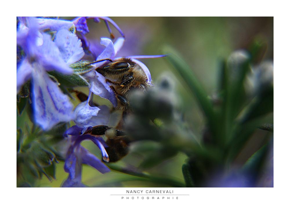 Love Bugs 09/04