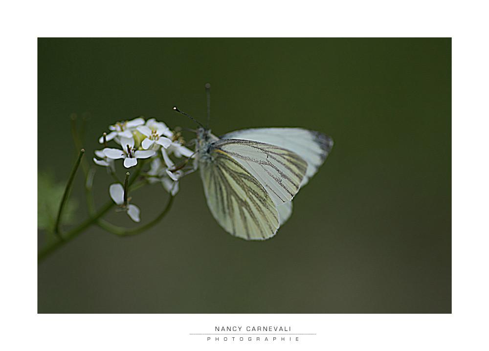 Love Bugs 09/06