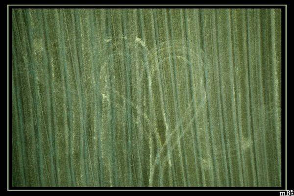 >Love