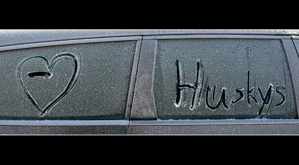 Love Huskys