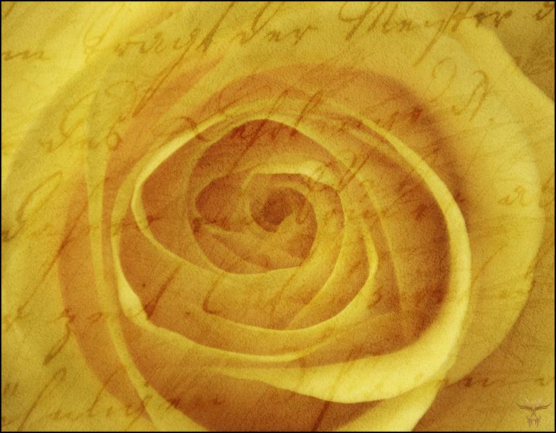 love letter 3