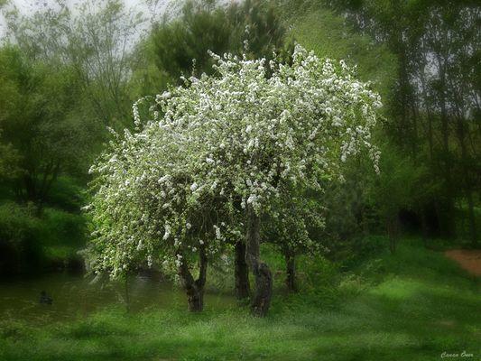 Love of Spring...