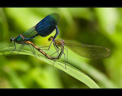 love on a leaf