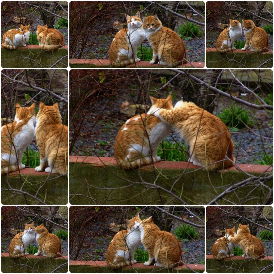 Love Story..
