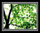 love under this romantic summer tree ii