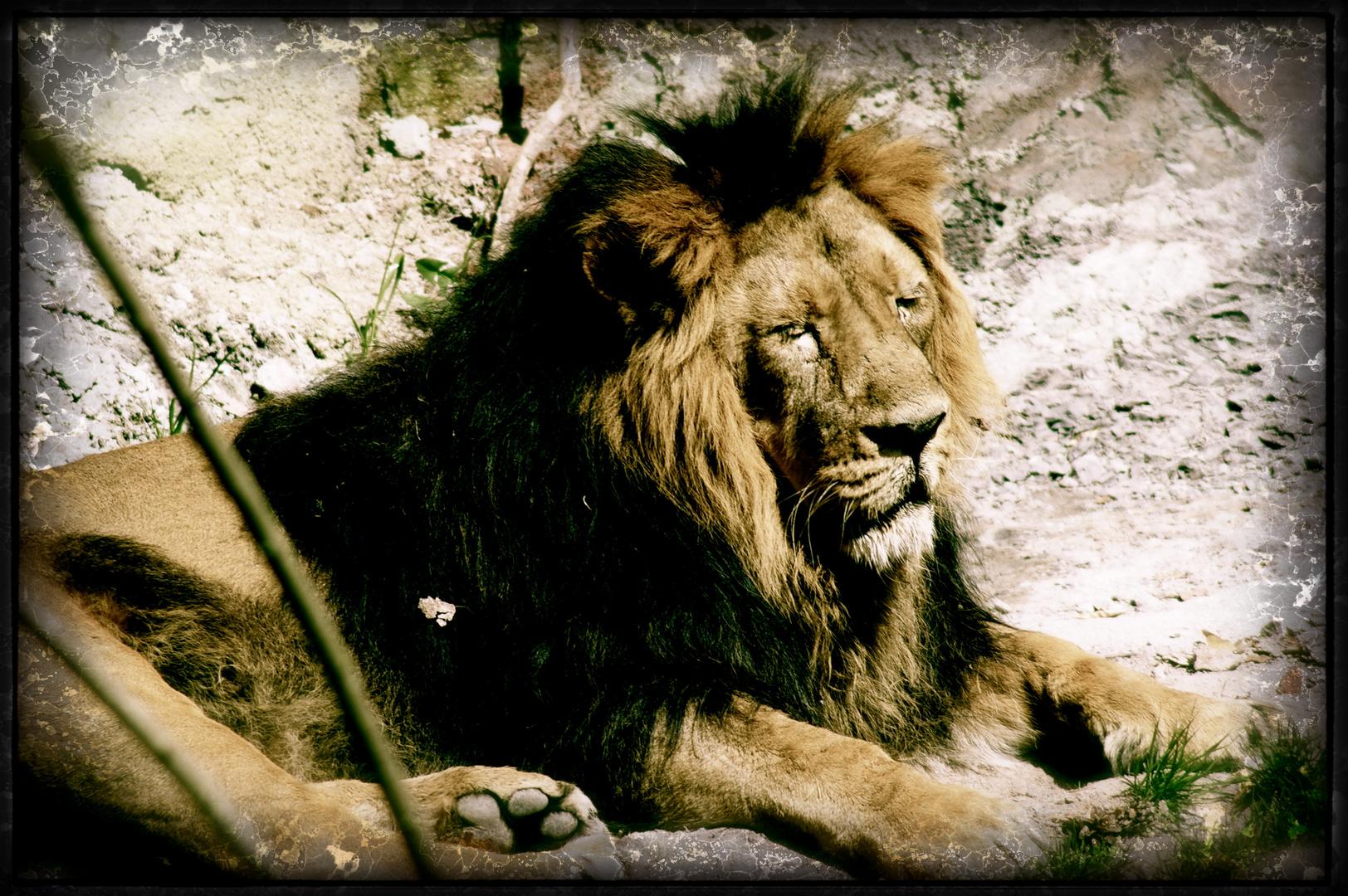 Loveless Lion
