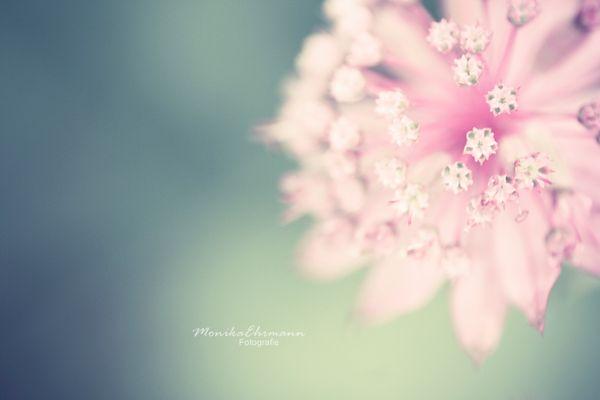 lovely*