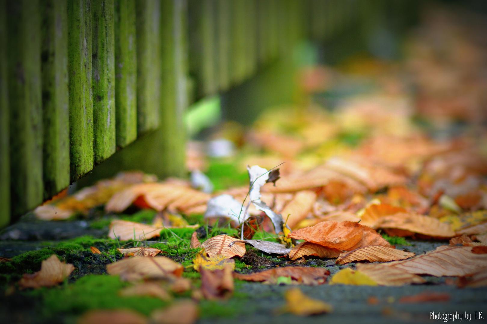 lovely autumn ♡