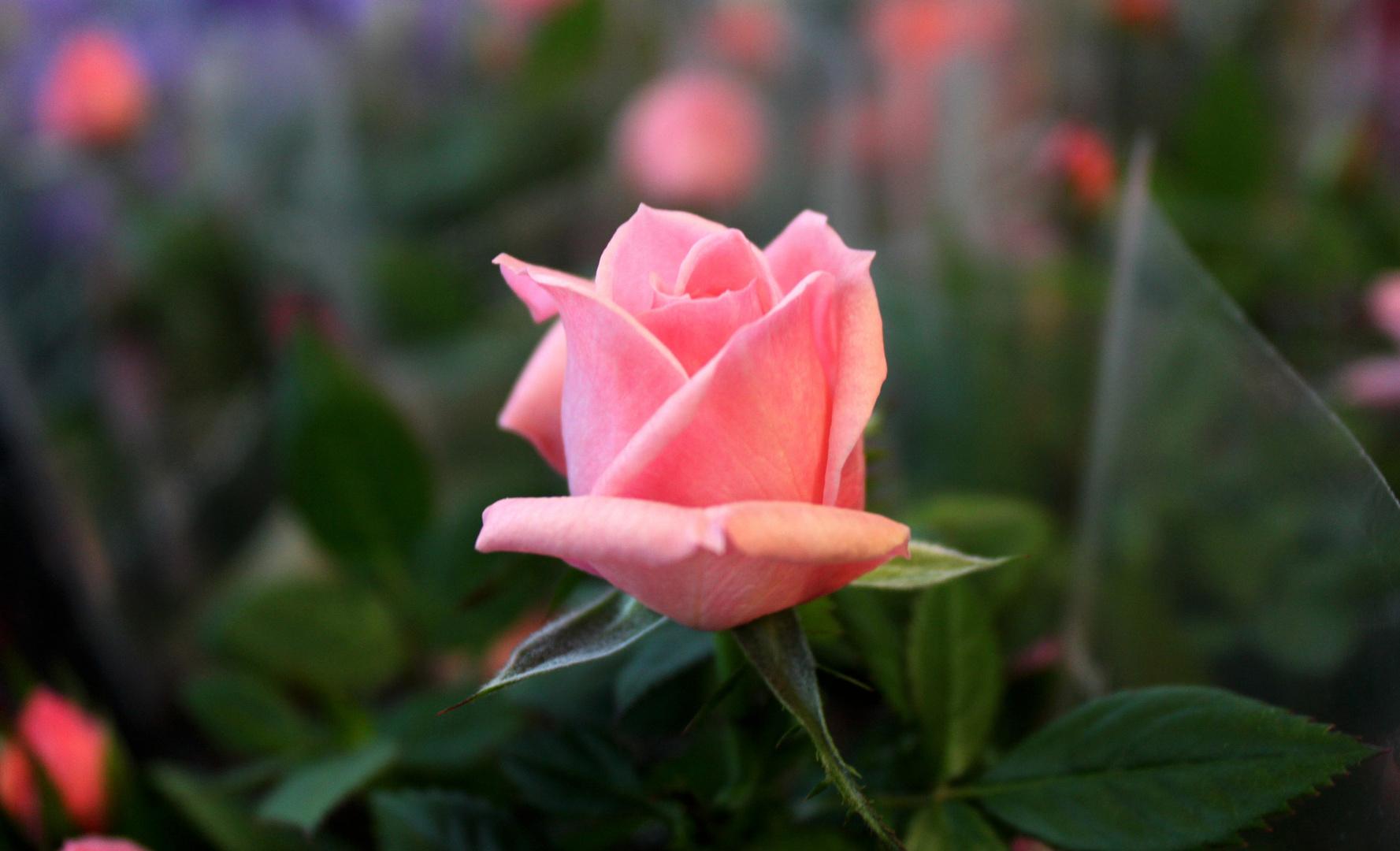 Lover-Flower