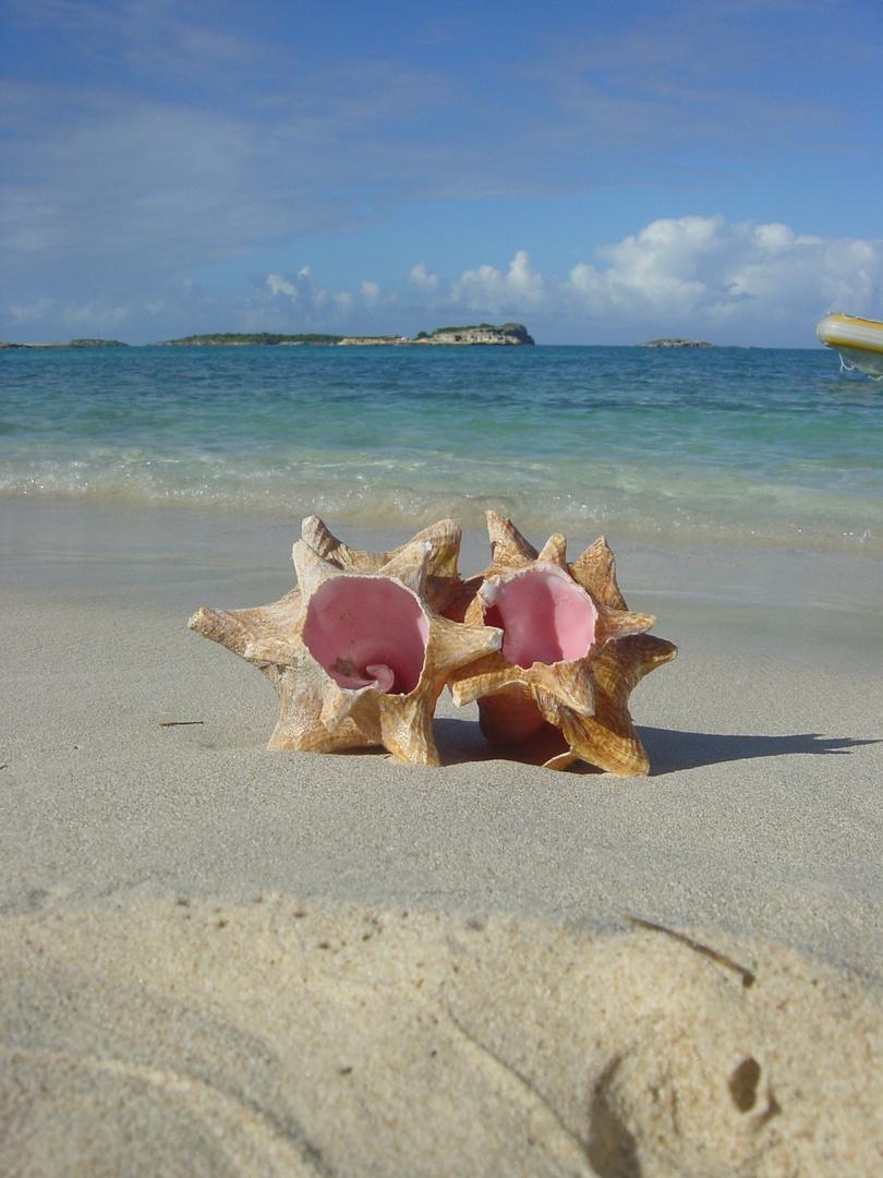 Lovin Shells