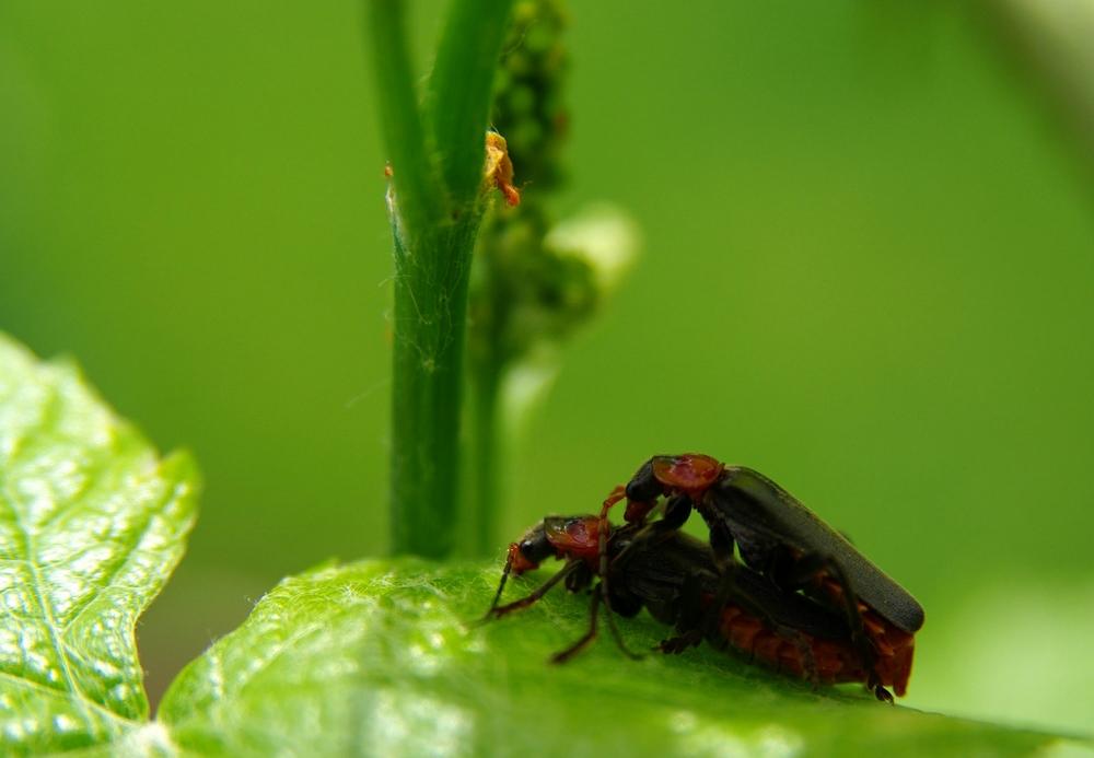 Loving Bugs