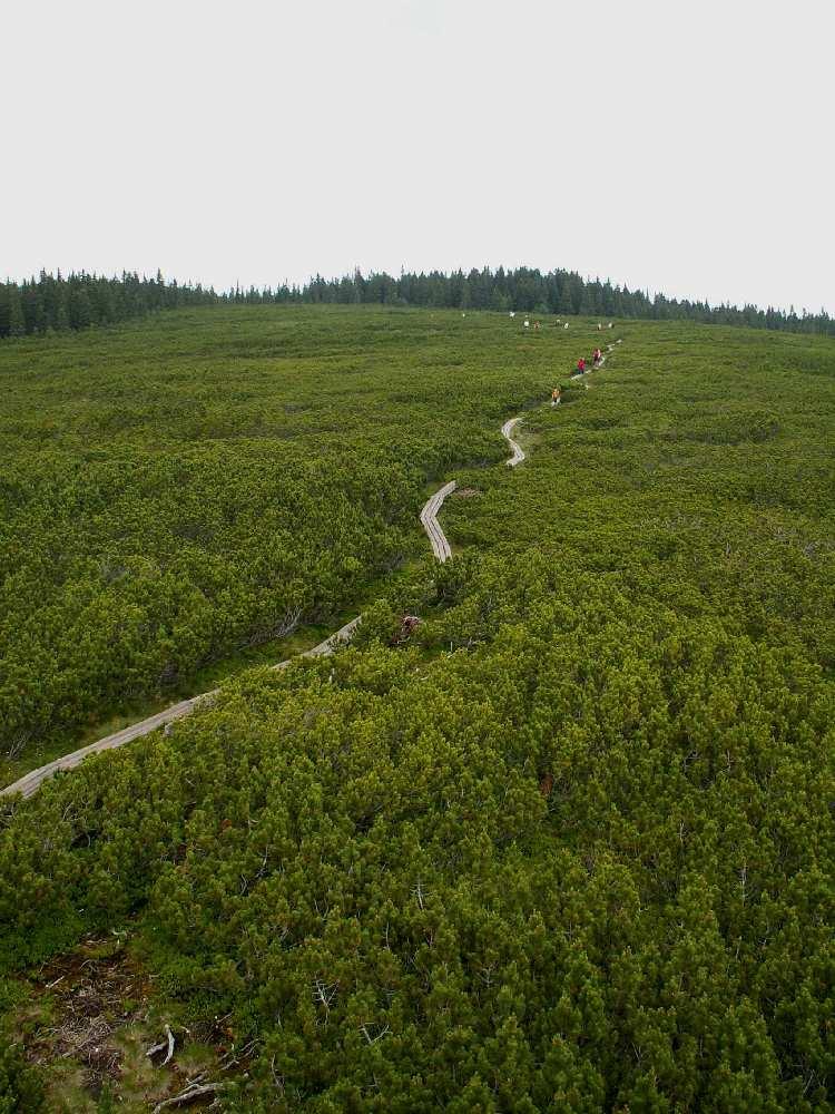 Lovrenc peat bog (Pohorje), Slovenia