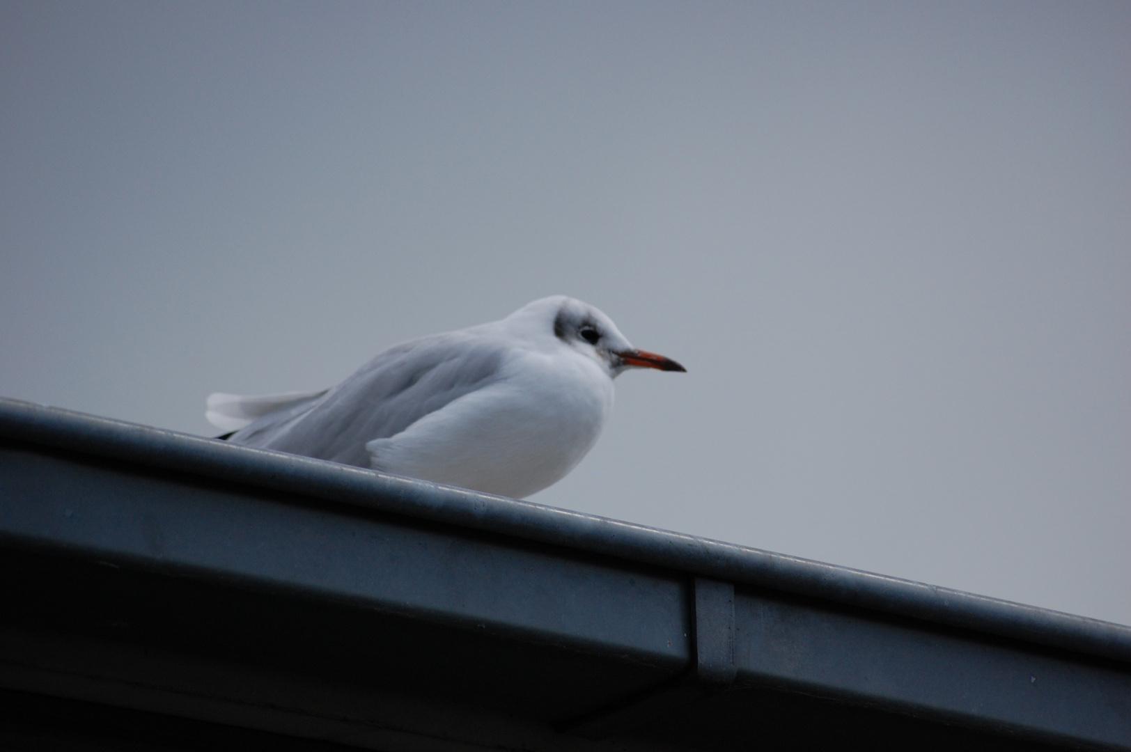 low contrast bird