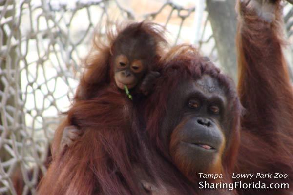 Lowry Park Zoo 2009