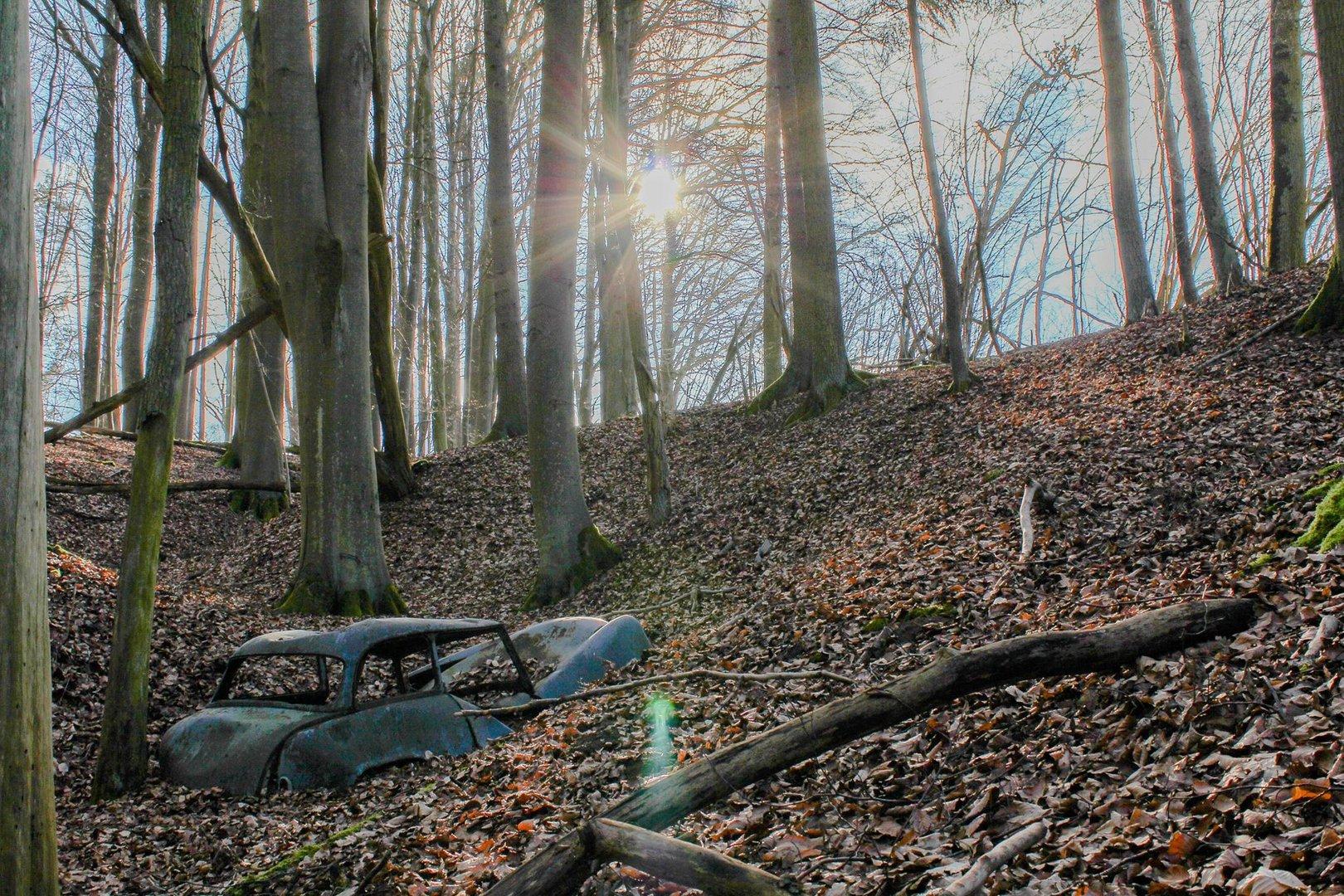 Loyd im Wald :)