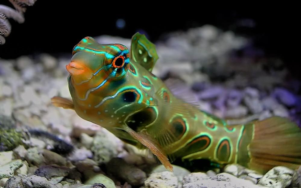 Lsd fisch foto bild tiere wildlife fische bilder auf for Fisch bilder