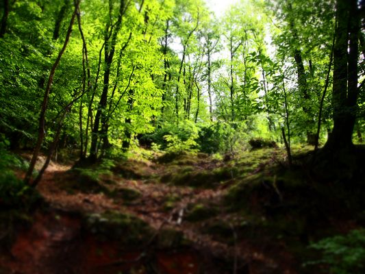 LSD-grüner Wald