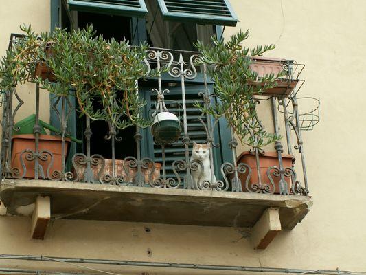 lucca chat sur le balcon