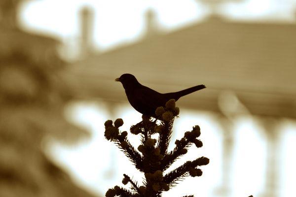 L'uccellin che vien dalla campagna