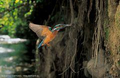 L'uccellino di Santa Maria