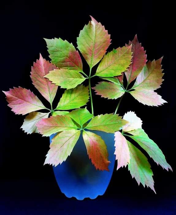 Luci e colori della natura.