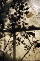 Luci ed ombre a Bandella Bandella 1