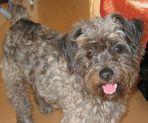 Lucky ein Hund aus dem Ausland....aus der Tötungsstation...
