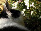 * Lucky im Frühling *