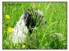 Lucky im Gras