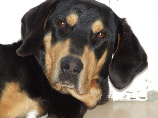 Lucky, mon chien qui vient de...la S.P.A