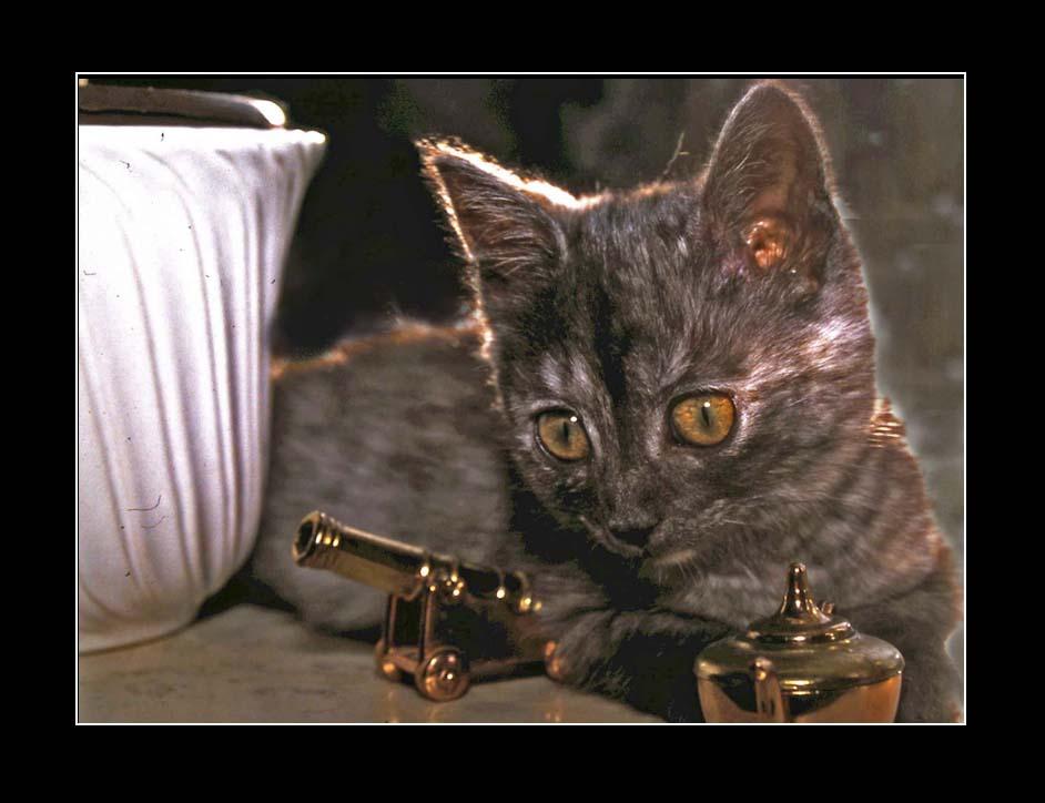 Lucky - unsere Mini-Katze