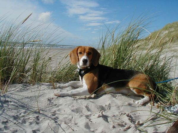 Lucy am Strand (1)